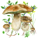 Mushrooms app for pc logo