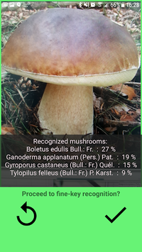 Mushrooms app pc screenshot 1