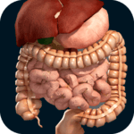 Internal Organs in 3D (Anatomy) icon