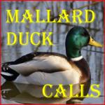 Mallard Duck Calls icon
