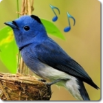 Bird Sounds & Ringtones icon