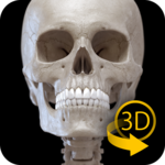 Skeleton | 3D Anatomy icon