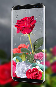 Rose Live Wallpaper 2018 with Waterdrops pc screenshot 1