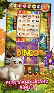 Bingo Pets Mania: Cat Craze pc screenshot 1