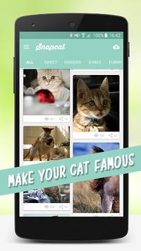Cat Wallpapers 🐈 pc screenshot 1