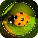 Insect identifier App by Photo, Camera 2020 icon