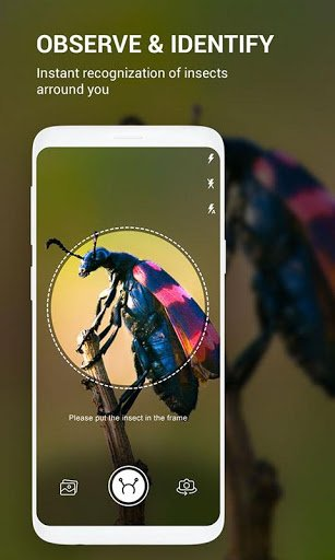 Insect identifier App by Photo, Camera 2020 pc screenshot 1