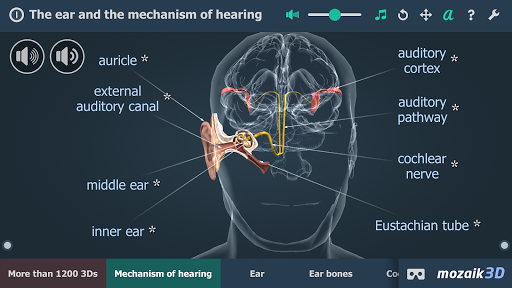 The mechanism of hearing educational VR 3D pc screenshot 1