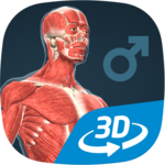 Human body (male) educational VR 3D for pc logo