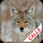 Coyote calls icon