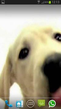 DOG SCREEN CLEANER LWP FREE pc screenshot 1
