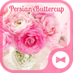 Pink Flower Wallpaper Persian Buttercup Theme icon
