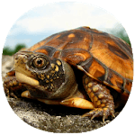 How to Take Care of a Pet Turtle icon
