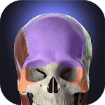 Anatomyka - Interactive 3D Human Anatomy icon