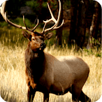 Elk Hunting Calls Free icon
