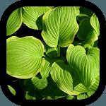 garden plants icon