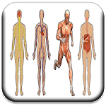 All Body Systems icon