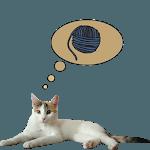 Zenka the cat widget icon