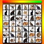 Onet Classic Animals icon