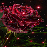 Magical Rose Live Wallpaper icon