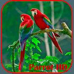 Parrots HD Live Wallpaper icon