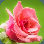 Flower Puzzle Sliding icon