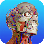 Gray's Anatomy – Atlas | Free & Offline icon