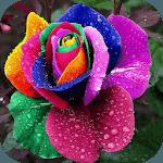 Exotic Flowers icon