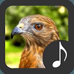 Hawk Sounds icon