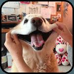 Funny dogs pics icon
