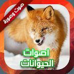 أصوات الحيوانات صوت وصورة for pc logo