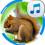 Sounds of Squirrels icon