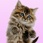 Talking Cat. Dances and Purrs. for pc logo