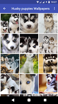 Husky puppies Wallpapers pc screenshot 2