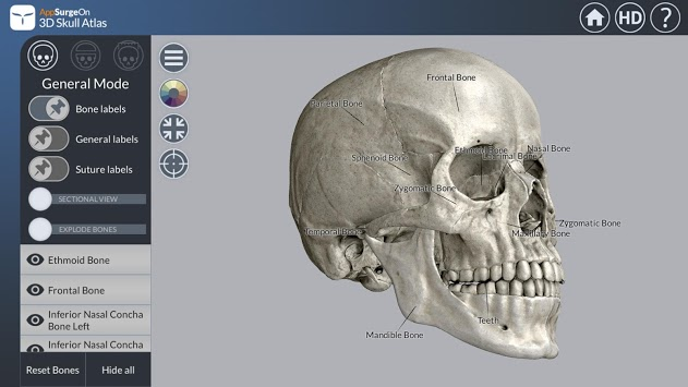 3D Skull Atlas pc screenshot 1
