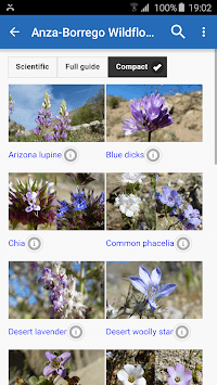 Anza-Borrego Wildflowers pc screenshot 1
